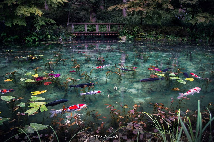 Monet s pond in japan that looks like monet s paintings for Your pond japan