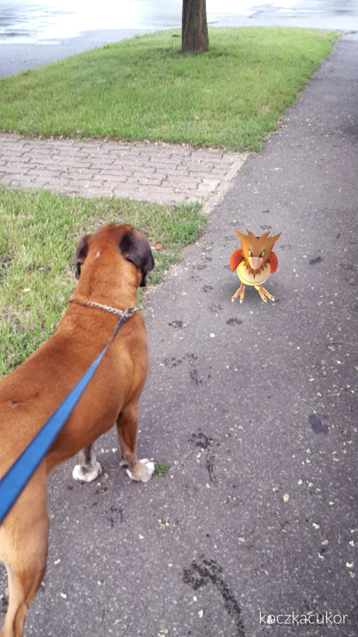 Pretty Sure She Sees The Spearow