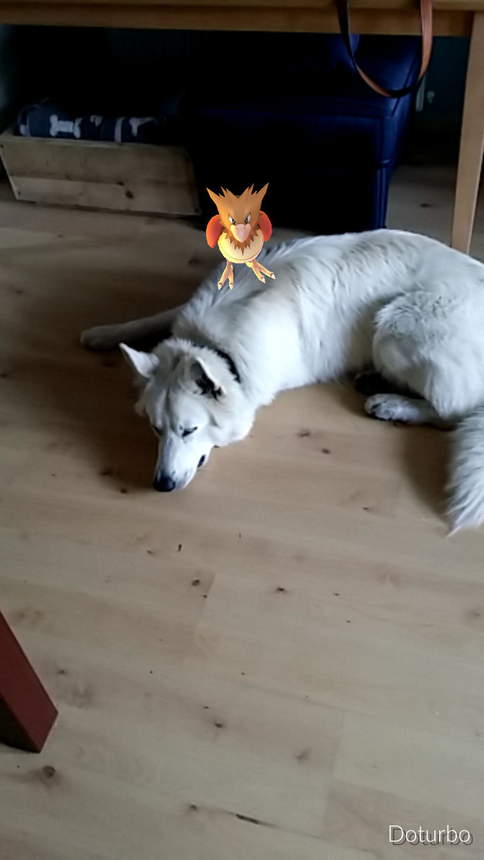 This Spearow Killed My Dog. ????
