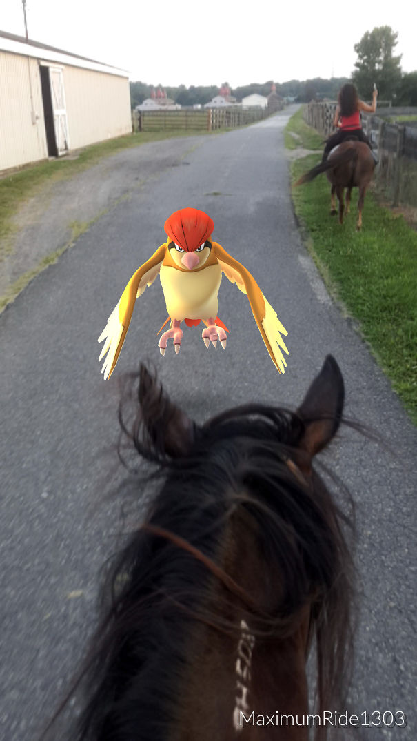 Pidgeotto Annoying My Horse