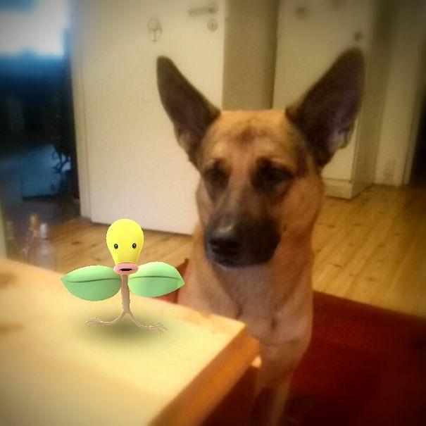 Fivo Found His First Pokémon ;)