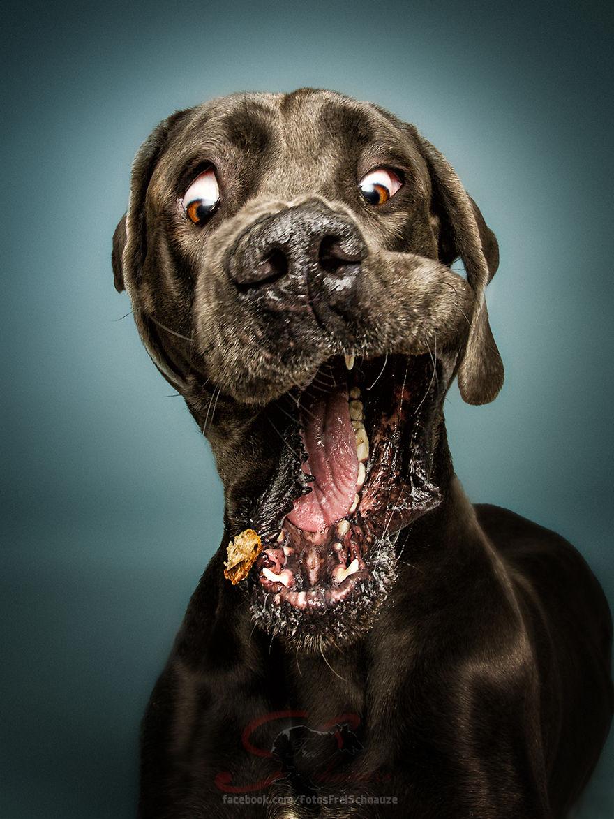 When I Am Bored I Throw Treats To Dogs