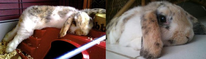 My Sweet Rabbit's First Photo.... And The Last I Took Of Him. Rip Jack !