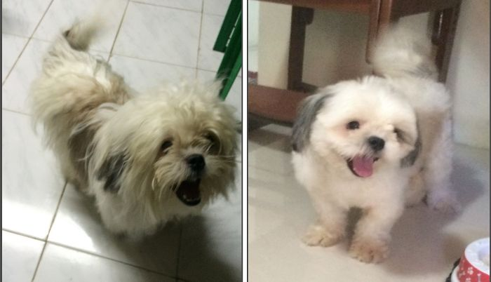 I'm Basty!!! Imma Handsome Shih Tzu :) ( Before & After Haircut)