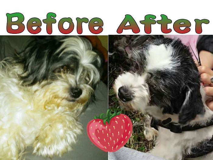 Strawberry Before An After