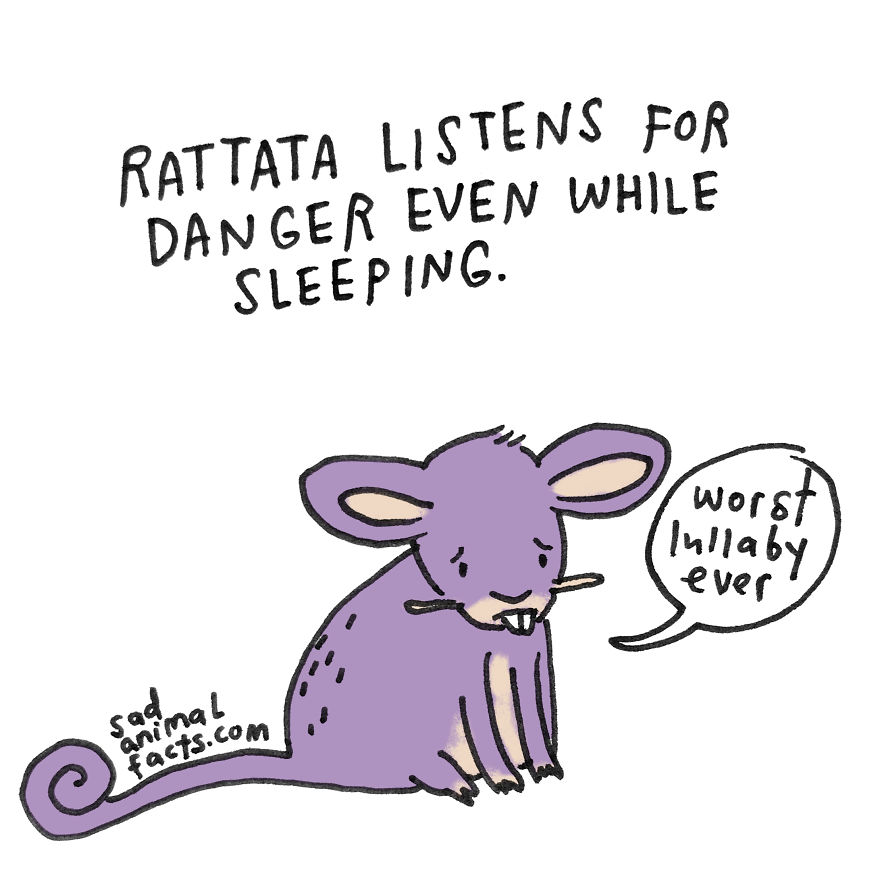 Rattata Sleeps With One Ear Open