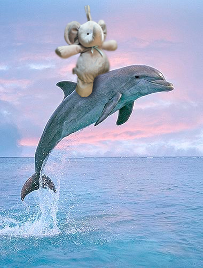 Swimming With His Friend Flipper
