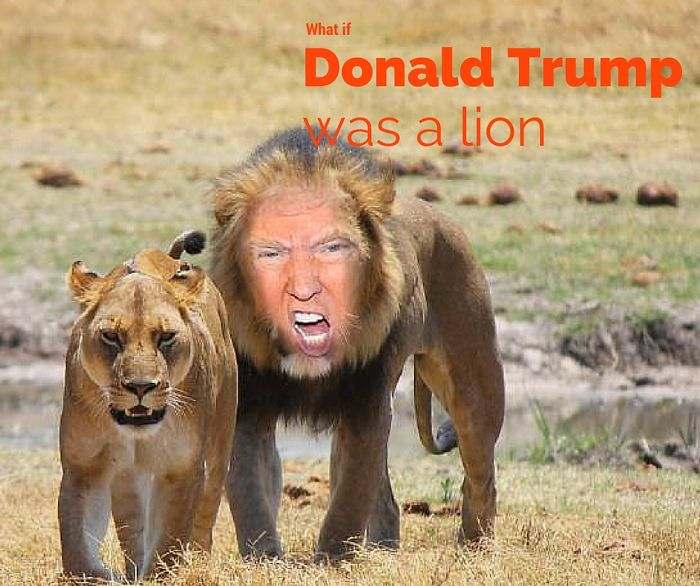 What If Donald Trump Was A Lion?