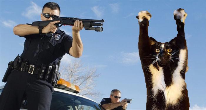 Cats' Lives Matter