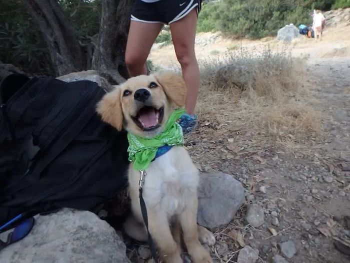 My Friend Adopted A Stray, Meet Duncan, Possibly The Happiest Looking Dog On Crete