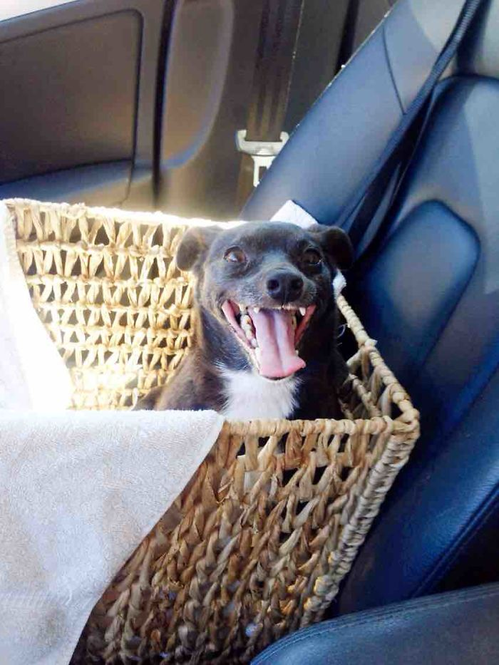 First Ride Home From The Shelter - Finally A Home At 11 Years Old