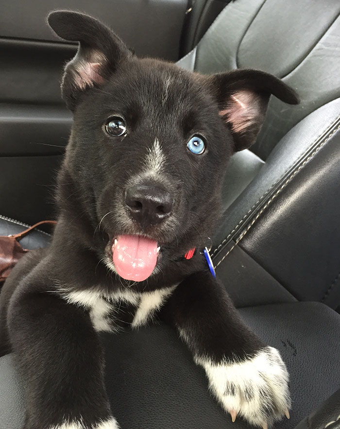 My Name Is Ripley And I Was Adopted Today