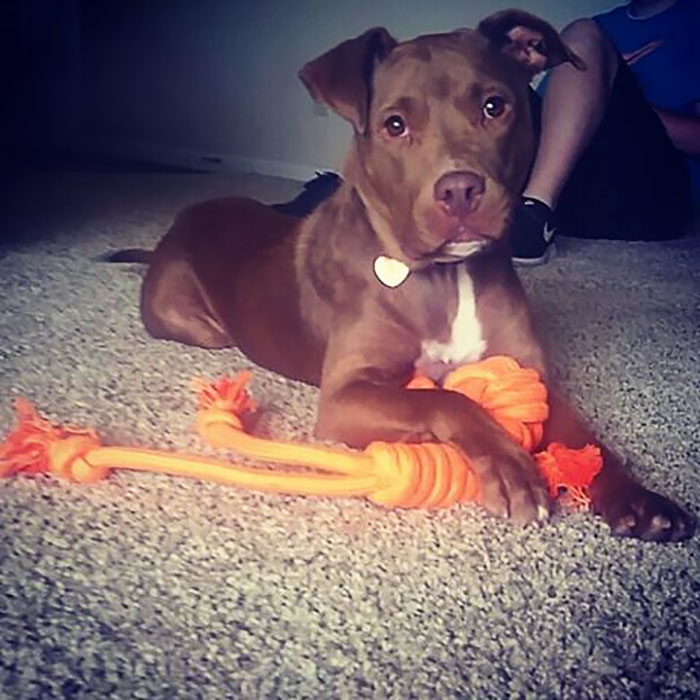 Meet Harper Everyone! She's Settling Into Her New Home With New Toys