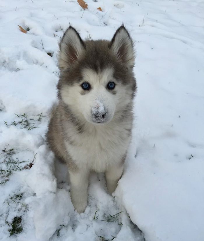 My Sister And Her Husband Adopted This Cutie, This Is His First Snow