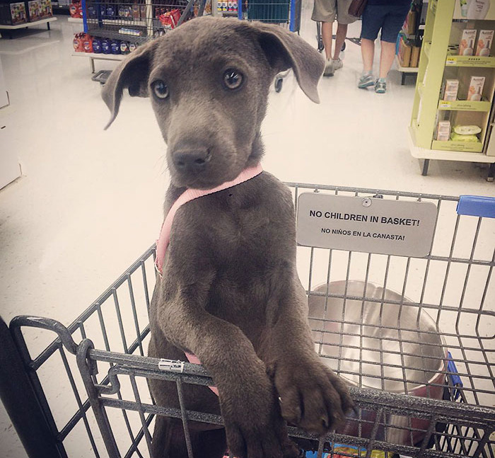 These 223 Dogs On Their First Day Of Adoption Will Make You Want To Adopt One Too