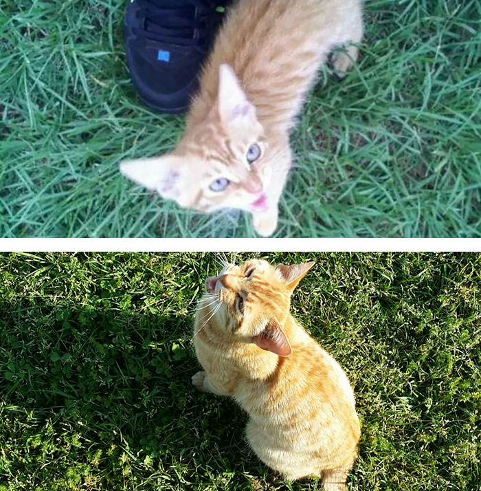 Here's The First Picture I Took Of Our Cat Simba And One Of The Last
