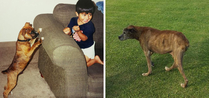 My Dog On One Of His First Days And On His Last