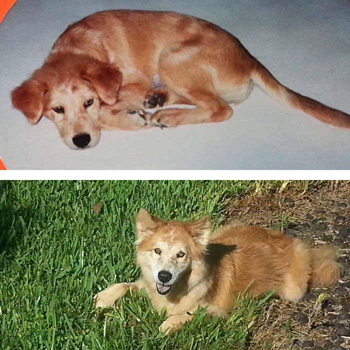 Our First And Last Days With Our Beautiful Lucie