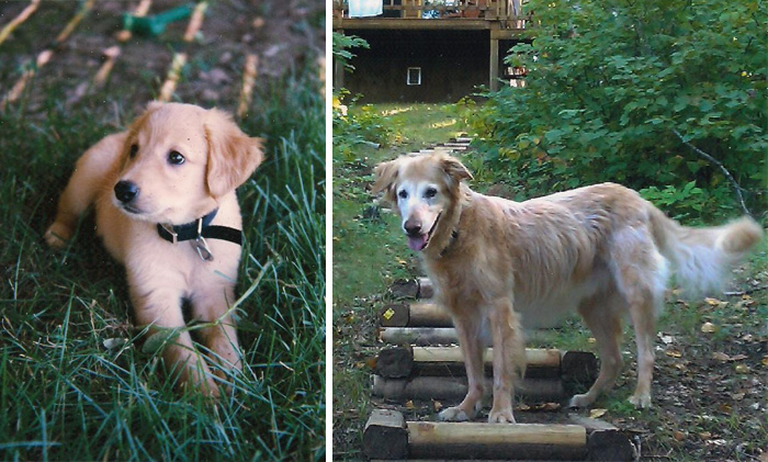 Here's The First And The Last Pictures We Ever Took Of Our Old Dog, 16 Years Apart