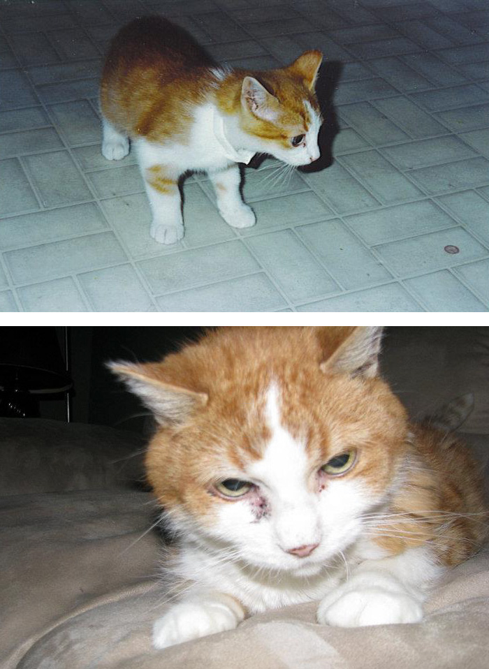 This Is My Cat's First And Last Picture