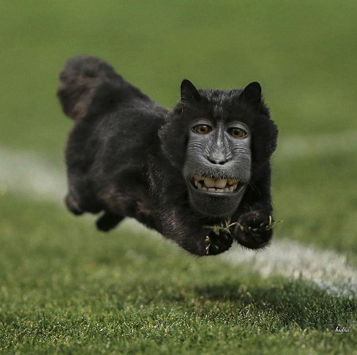 Catmonkey
