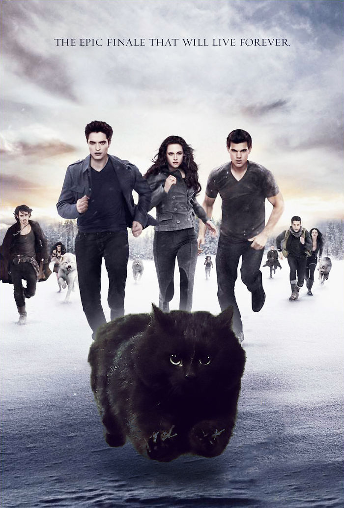Epic Cat, Vampires & Werewolves