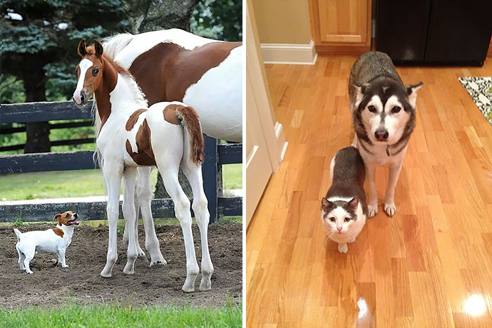 10+ Animal Brothers From Other Mothers