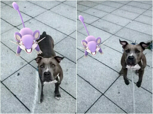 Battle With Rattata