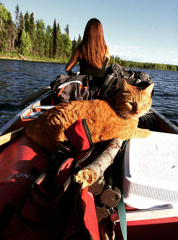 My Cat Is Pretty Cool. He Comes On Canoe Trips And Stuff