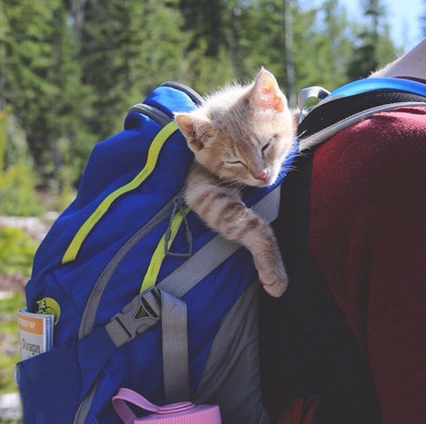 Hiking Is Exhausting