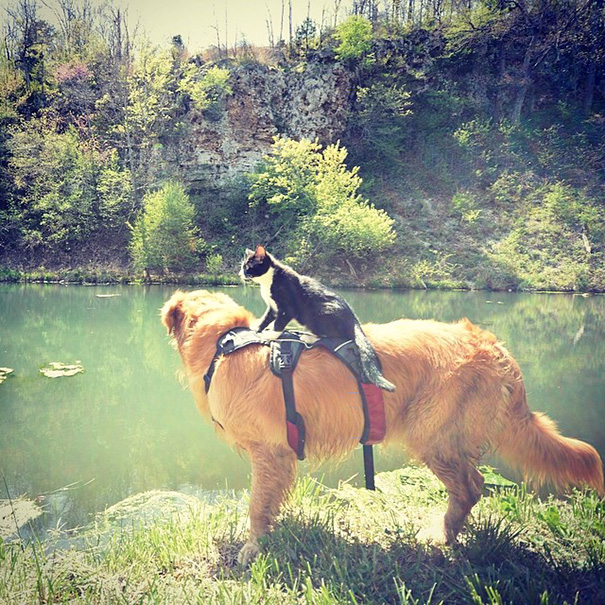Dog And Cat Hiking