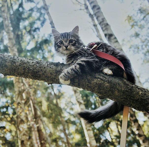Go Climb Trees, They Said. It'll Be Fun, They Said. Lies