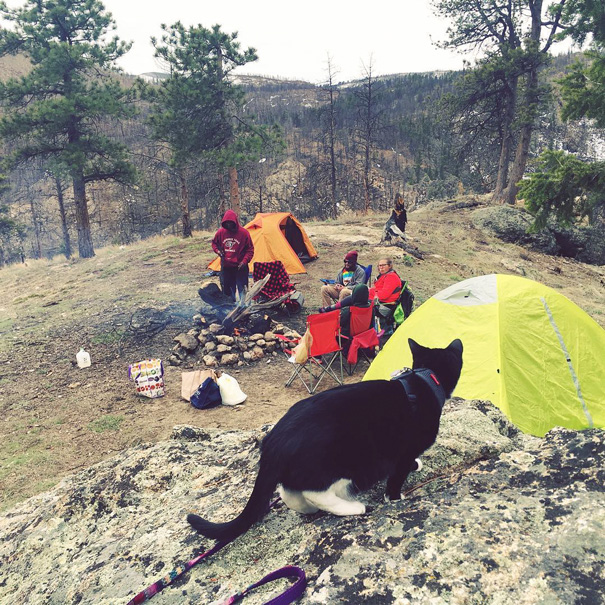 Foolish Hoomans Campurrs. No Hunting Nor Gathering. One Mouse Won't Go Far At This Campsite