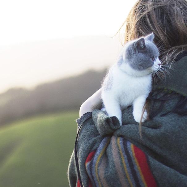 Adventure Kitty