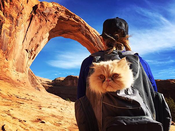 Kitty The Explorer