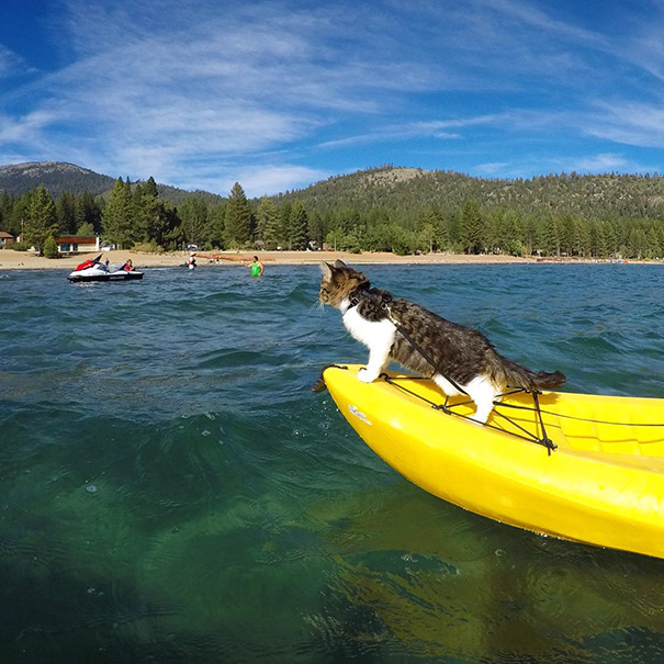 Braving The Waves And Kayaking On The Choppy Waters Of Lake Tahoe