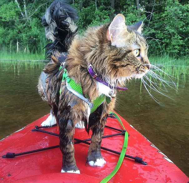 I'm A Purrfect Kayaker
