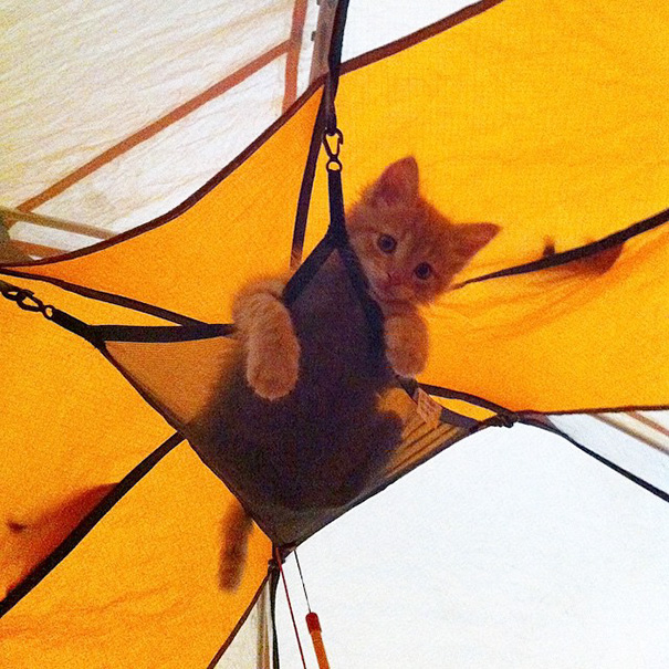 The Littlest Camper