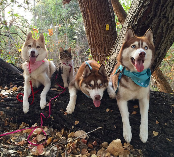 """""""Camping With Cats"""" Instagram Will Inspire You To Go Hiking With Your Cat"""