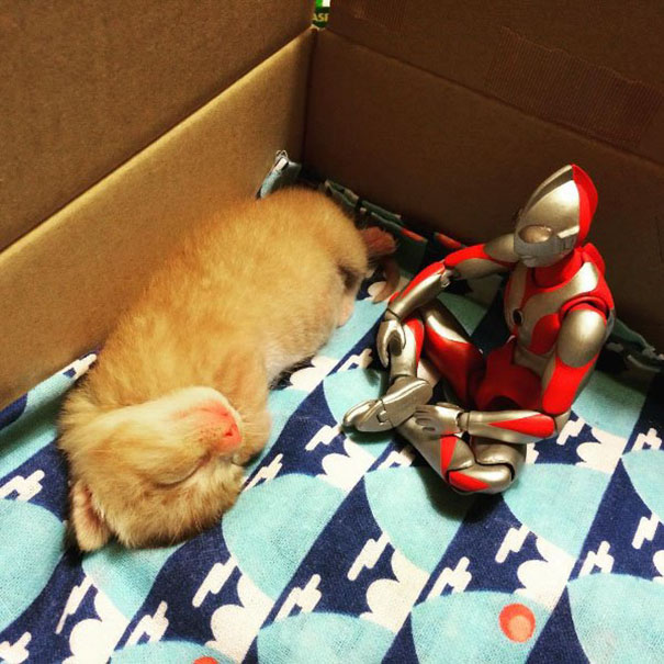 cat-growth-toy-ultraman-shlml-1