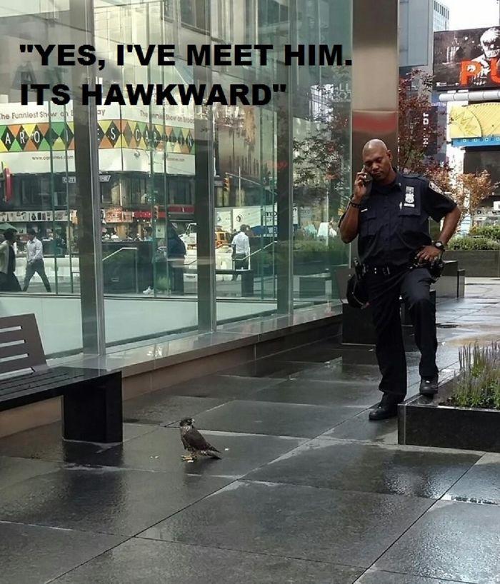 #7 Hawkward.