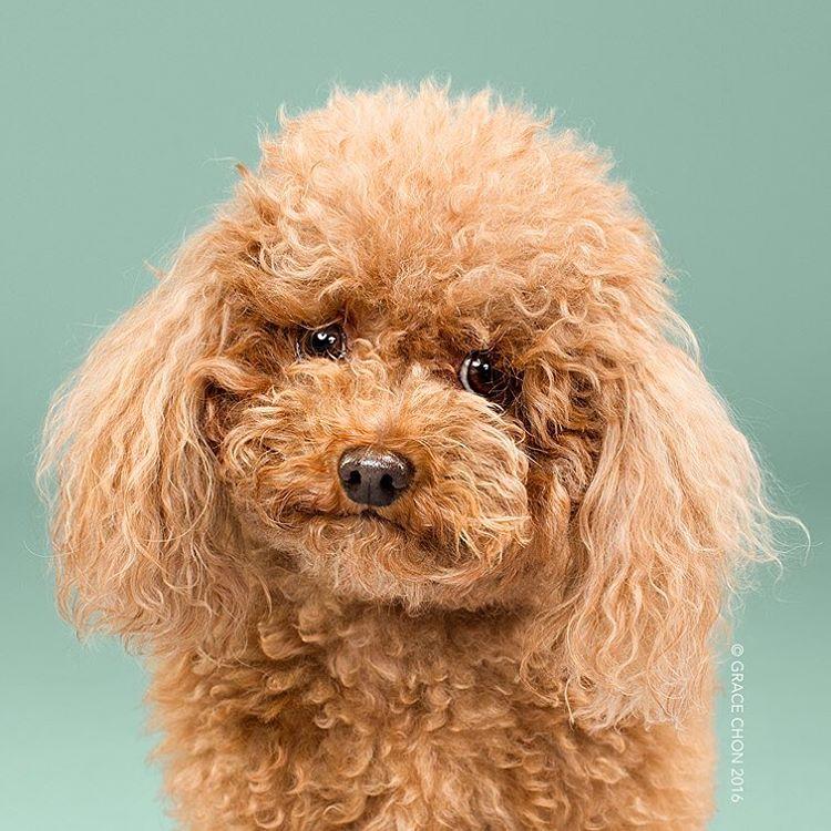 Cortes de pelo para cachorros