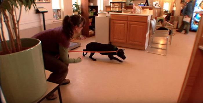 dog-pitbull-rescued-fighting-ring-loves-kittens-cherry-garcia-6