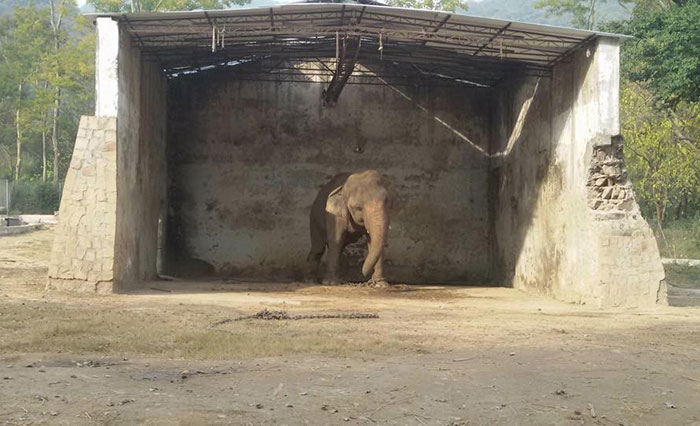 elephant-free-30-years-alone-murghazar-zoo-kaavan-1