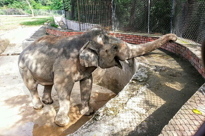 elephant-free-30-years-alone-murghazar-zoo-kaavan-10