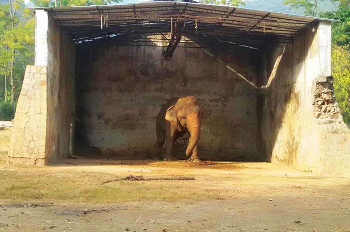 Elephant Kept In Chains For 28 Years Will Finally Be Freed From Pakistan Zoo