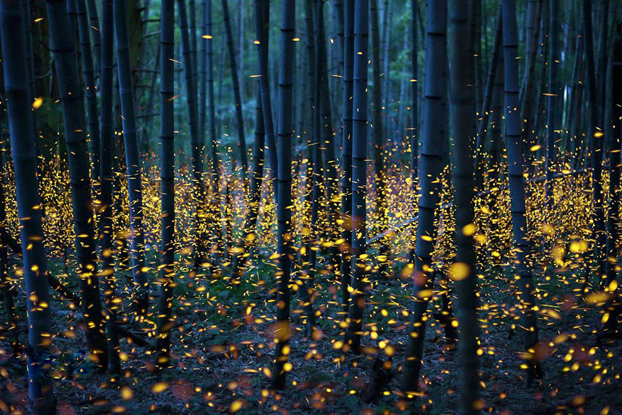 surreal photos of fireflies from japan s 2016 summer bored panda. Black Bedroom Furniture Sets. Home Design Ideas