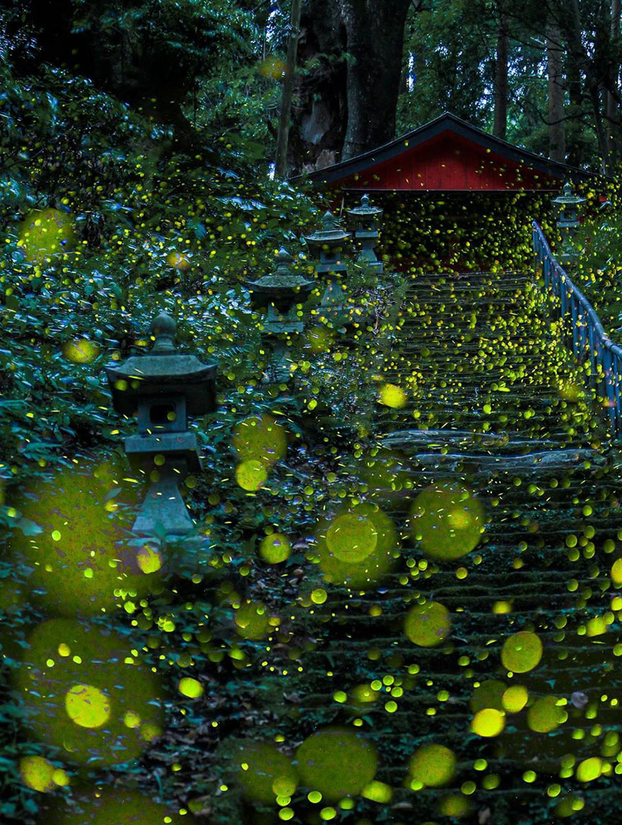 fireflies-long-exposure-photography-2016-japan-4a