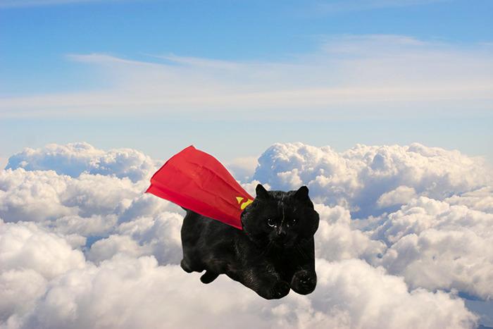 Super Kitty!