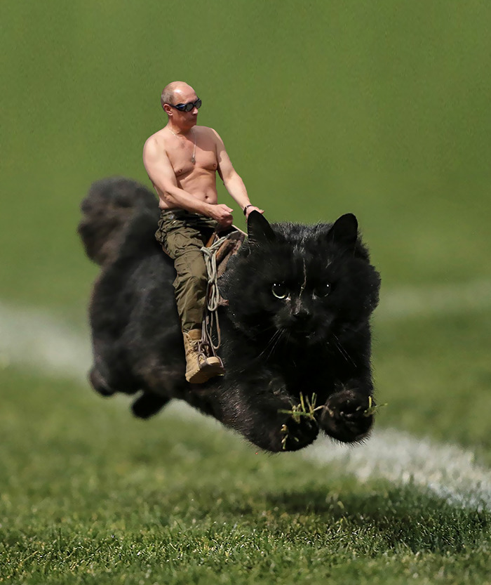 Putin On The Cat